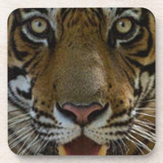Tiger Face Close Up Drink Coaster