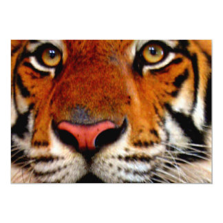 Tiger Face Closeup Card