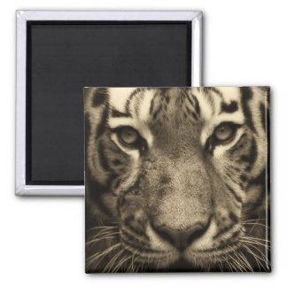 Tiger Face in Sepia Tones Magnet