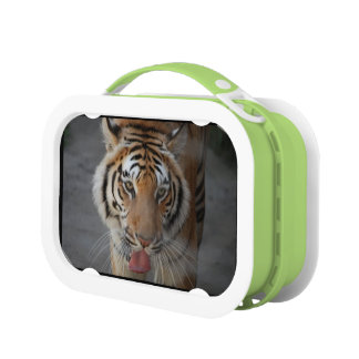 Tiger Face Lunch Box