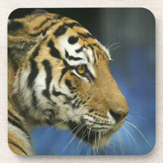 Tiger Face Photo Coaster