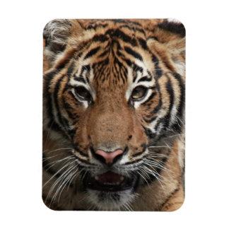 Tiger Face premium magnet Rectangle Magnets