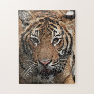 Tiger Face puzzle