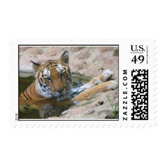 tiger face stamp