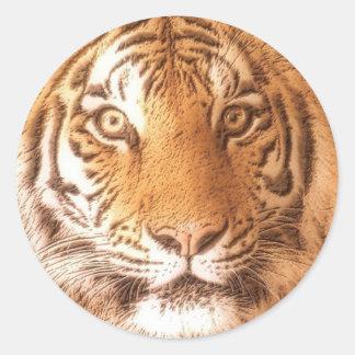 Tiger Face - Sticker