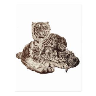 Tiger Family Postcard