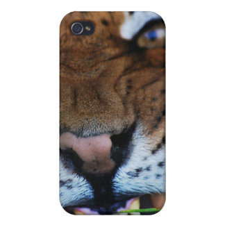 Tiger Fangs Close UP iPhone 4 Case