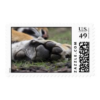 Tiger Foot Postage