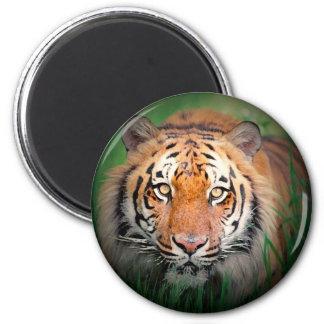 Tiger Free Spirit Magnet