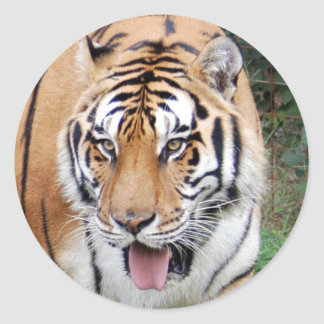 Tiger Friends-010 Classic Round Sticker
