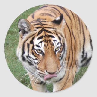 Tiger Friends-011 Classic Round Sticker