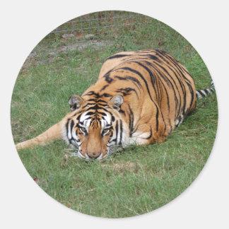 Tiger Friends-012 Classic Round Sticker