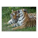 tiger-friends-b-2-b greeting cards