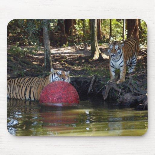 tiger-friends-b-3 tapete de ratón