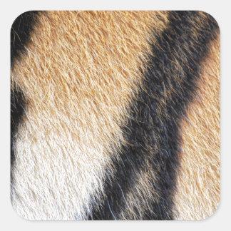 Tiger fur close up photo square sticker