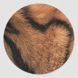 Tiger fur texture close-up details stickers
