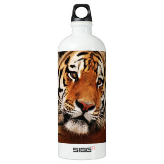 Tiger glance sideways photo aluminum water bottle