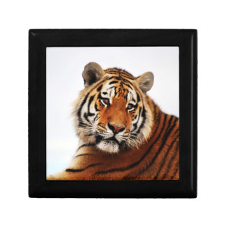 Tiger glance sideways photo keepsake box