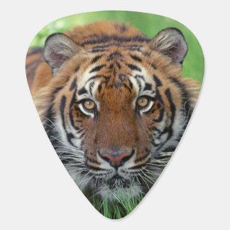 Tiger Guitar Pick