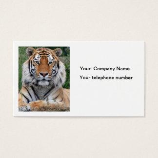 Tiger head beautiful photo custom business card