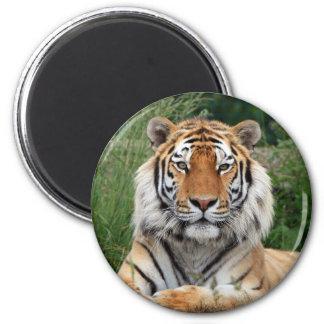 Tiger head beautiful photo fridge magnet