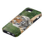 Tiger head beautiful photo iphone 5 case tough