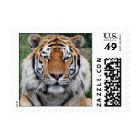 Tiger head beautiful photo portrait postage stamp