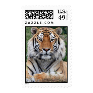 Tiger head beautiful photo portrait postage stamp