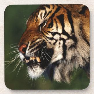 Tiger Head Close Up Beverage Coaster