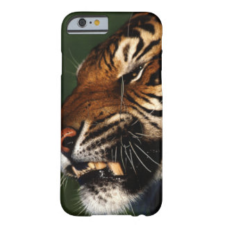 Tiger Head Close Up iPhone 6/6s Barely There iPhone 6 Case