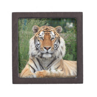 Tiger head male beautiful photo jewelry box premium jewelry box
