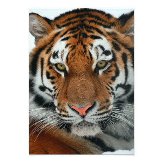 Tiger Headshot Card