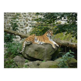 Tiger I Postcard