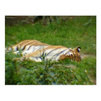Tiger II Postcard
