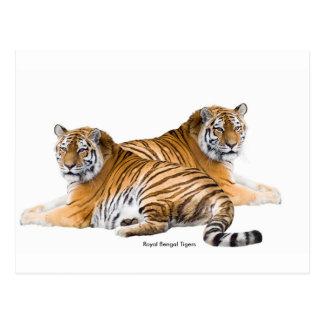 Tiger image for postcard