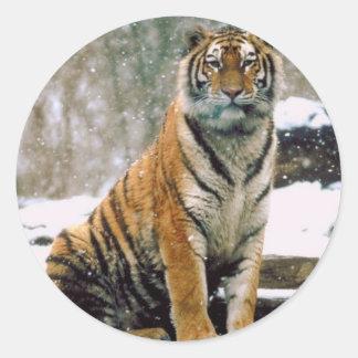 Tiger in Snow Classic Round Sticker