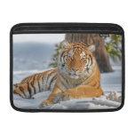 Tiger in Snow MacBook Sleeves