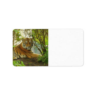 Tiger in The Forest Label