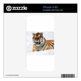 Tiger In The Snow Decal For The iPhone 4S