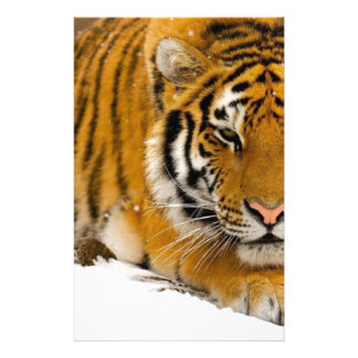 TIger in the Snow Ready to Attack Customized Stationery