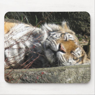 Tiger in the Sun Mouse Pad