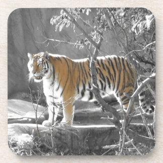 Tiger in the Trees Drink Coaster