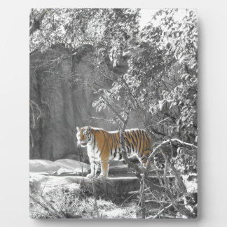 Tiger in the Trees Plaque