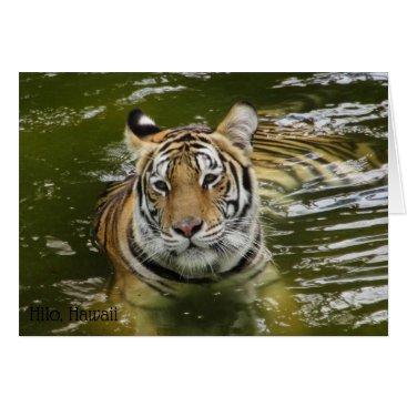 Hawaiian Themed Tiger in the Water Card