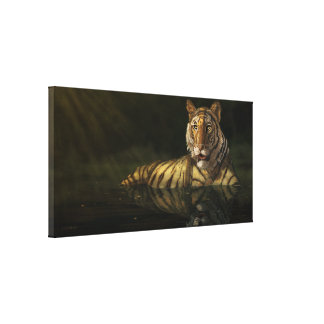 Tiger in the Water digital painting Canvas Print
