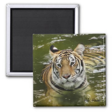 Hawaiian Themed Tiger in the Water Magnet