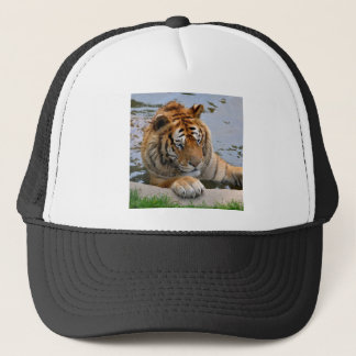 Tiger in the water trucker hat