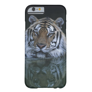 Tiger in Water Barely There iPhone 6 Case