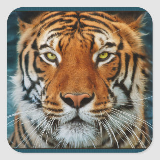 Tiger in Water Photograph Square Sticker