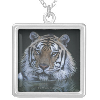 Tiger in Water Silver Plated Necklace
